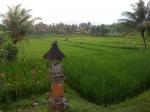 Bali: rizières à Ubud