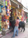 Bull in a shop, Puri, India