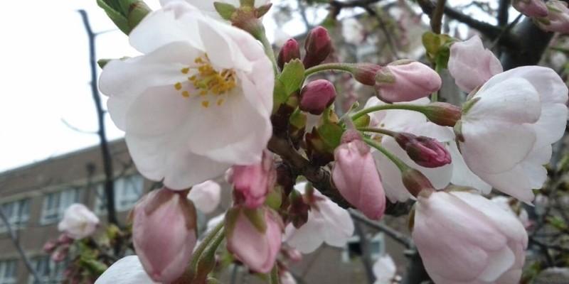 Spring in Busan