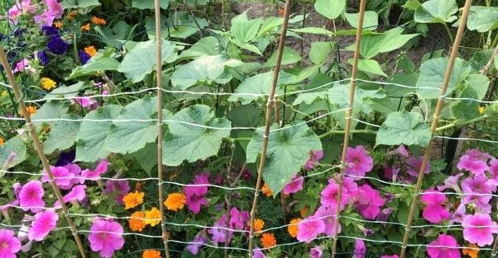 jardin header